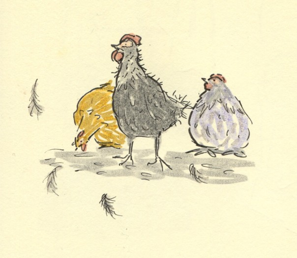 plucked chicken