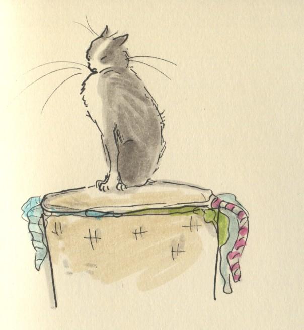 cat ate my washing