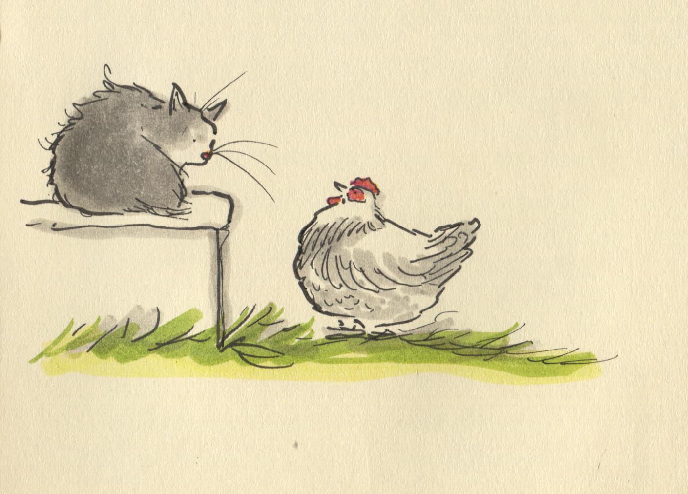 cat vs chicken