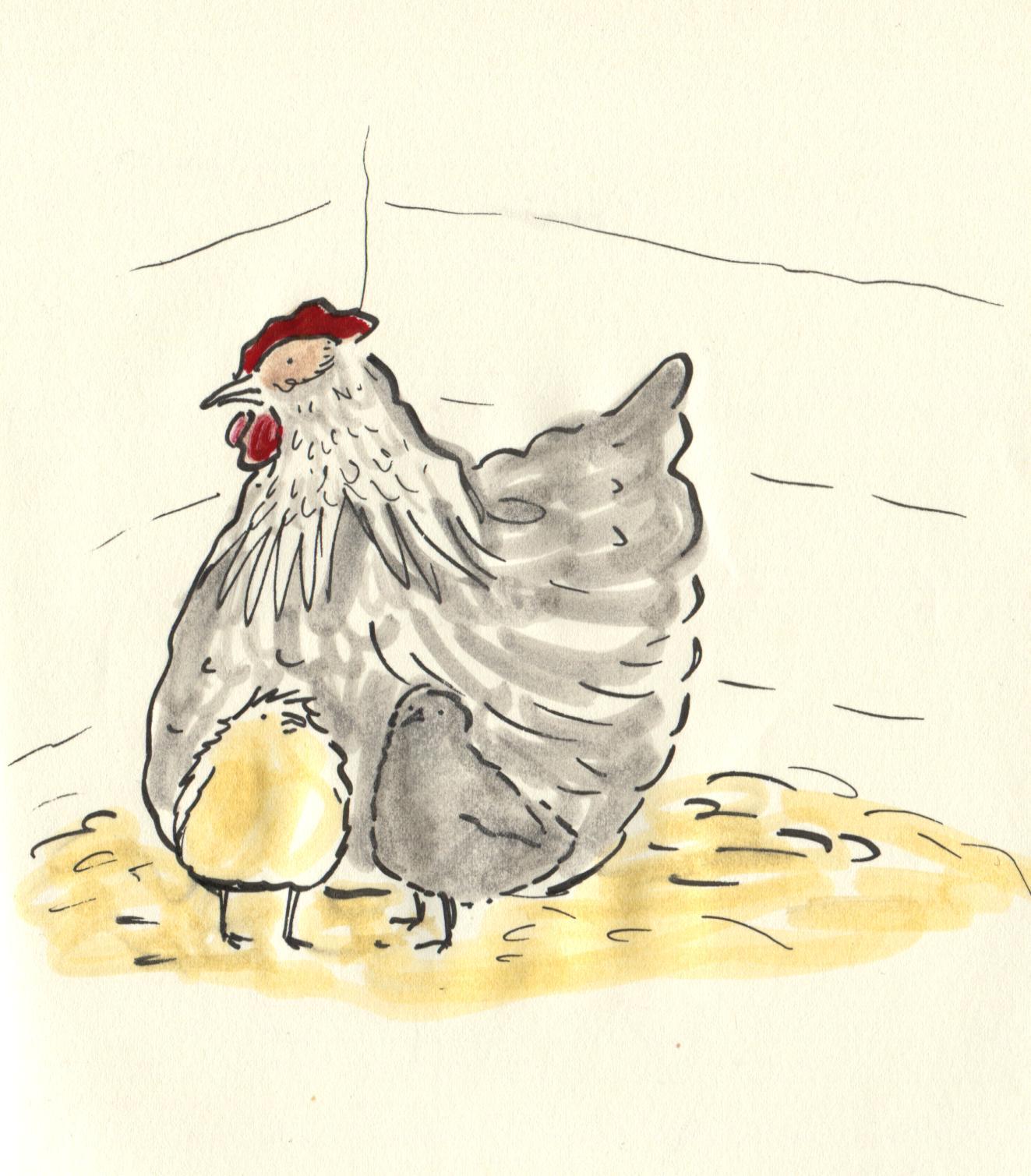Matildas chicks