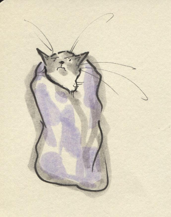 cat wrap