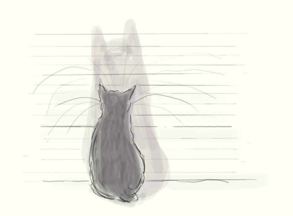 cat shadow.png